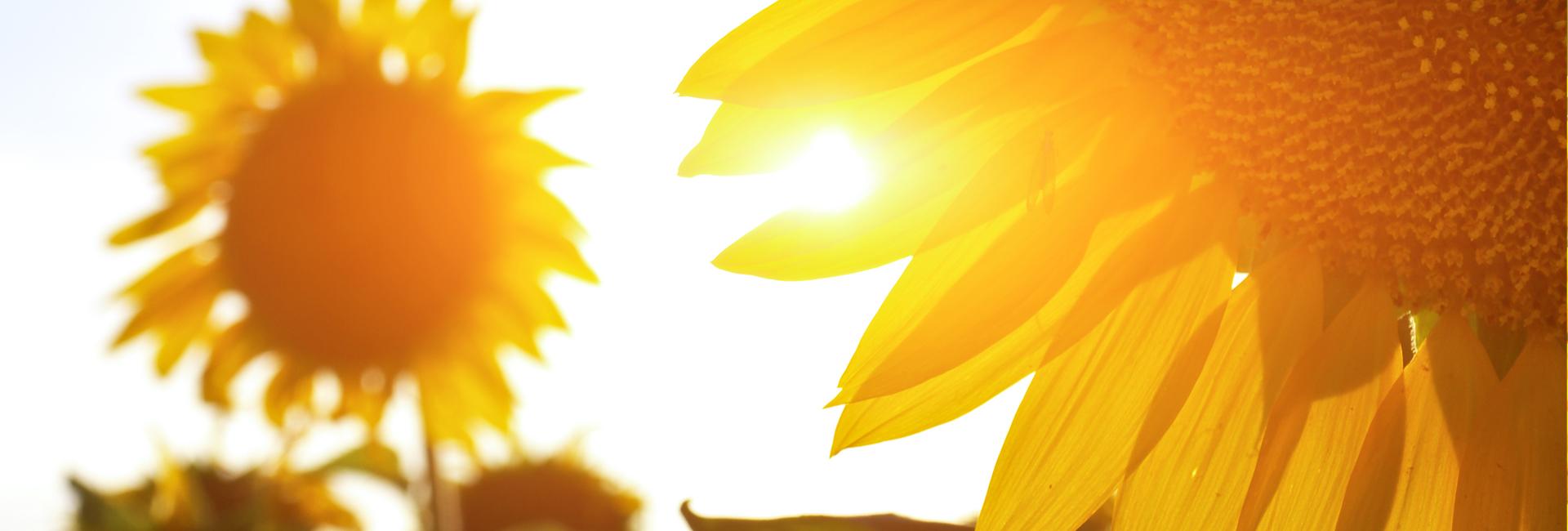 Astenie de primăvară, toamnă sau deficit de vitamina D3?